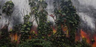 Umelec upozorňuje na negatívne dôsledky výroby palmového oleja