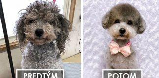 Psí salón mení psíkov na nepoznanie! Vyzerajú ako rozkošné plyšové hračky