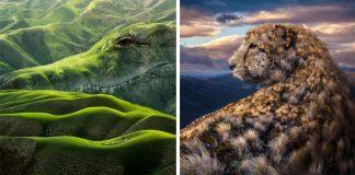 Fotomontáže, ktoré kombinujú prírodné scenérie s divokými zvieratami