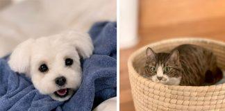 Realistické plstené zvieratká | Mačky a psíkovia z plsti ako skutoční