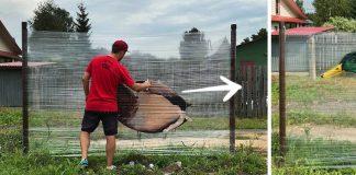 Grafiti na celofáne napnutom medzi stromami | Cellograffiti Evgeny Ches