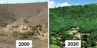 Obnovený les, do ktorého sa vrátili aj zvieratá dokázal pár za 20 rokov