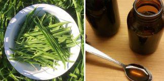 Domáci skorocelový sirup | Recept, ako vyrobiť sirup zo skorocelu na kašeľ